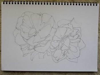 2013年4月27日*色鉛筆画下描き